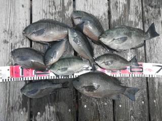 キープした魚